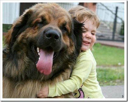 World_Largest_Dog_10