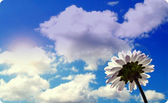 wallcoocom_daisy_by_dimage
