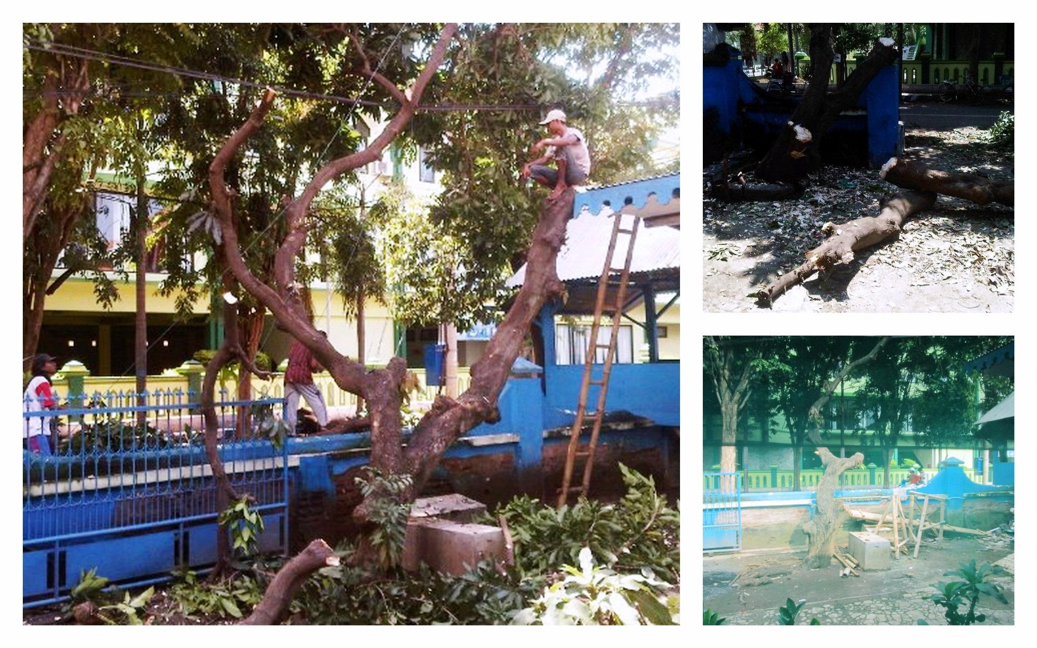 Penebangan Pohon depan Rumah